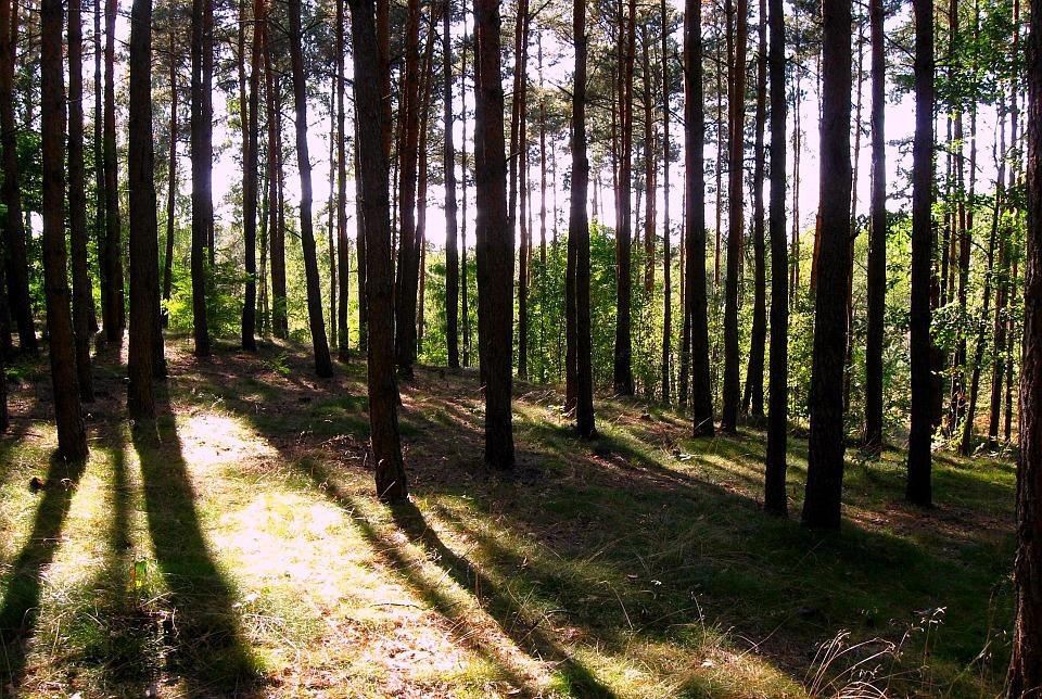 Frijsenborg skovene